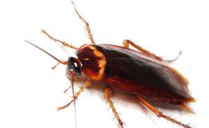 entomoapothitika-simvoules
