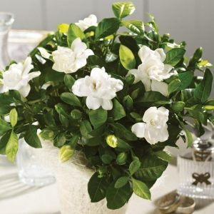 gardenia-exypnes-idees-gr