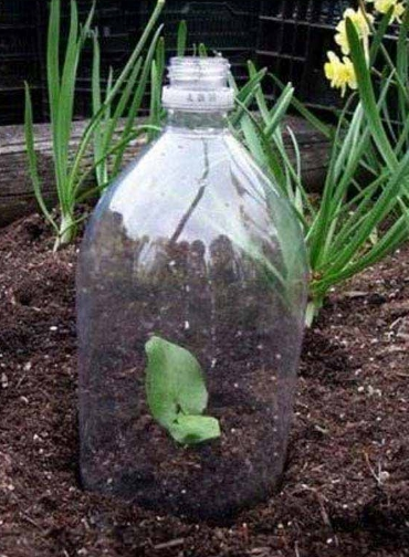 greenhouse-from-bottles