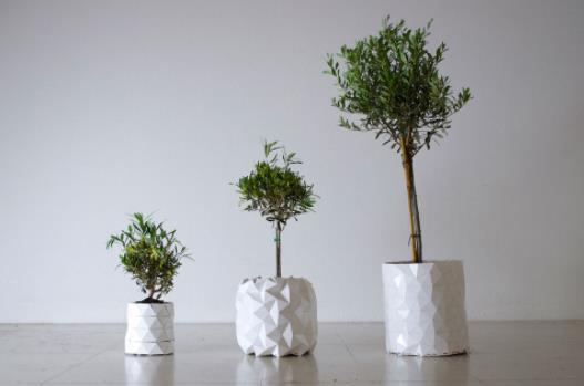 elia olive tree