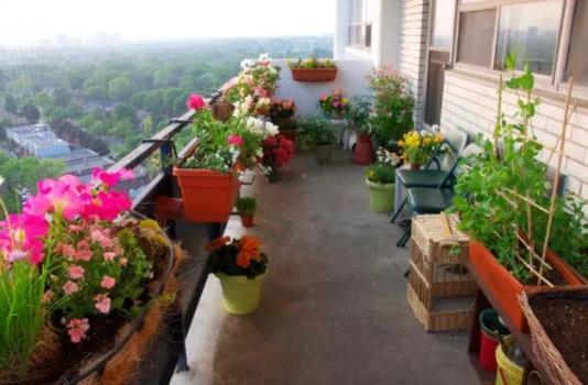 fyta balcony