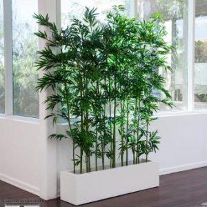 bambou spiti