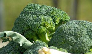 broccolo spora