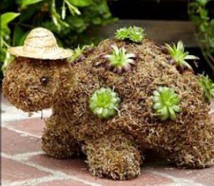 xelona kapelo fyta