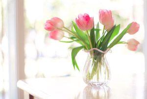 roz toulipes se bazo me nero