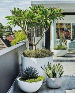 εντυπωσιακά φυτά