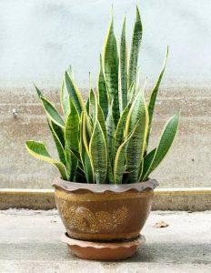 φυτά διακόσμηση εσωτερικού χώρου