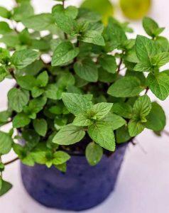 φυτά εσωτερικού χώρου άγχος