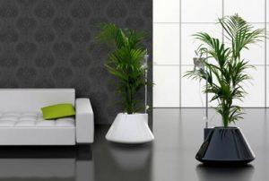φυτά στο σαλόνι