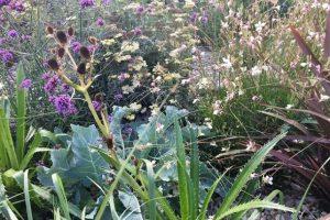 άγρια λουλούδια πολυετή φυτά