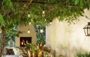 αναρριχώμενα ή ψηλά φυτά που μπορείς να βάλεις στο μπαλκόνι για περισσότερη σκιά