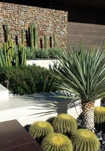 διακόσμηση του κήπου ή της αυλής με κάκτους