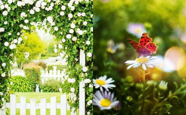 διακόσμηση κήπου