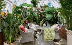 εσωτερικός κήπος φυτά