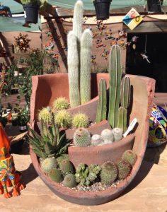 κάκτοι φυτά κήπου σε διάφορα μεγέθη και σχήματα