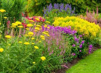 φυτά αντέχουν καλοκαίρι ζέστη