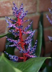 φυτά design κήπου