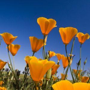 φυτά καλοκαίρι