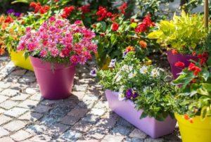 γλάστρες με λουλούδια