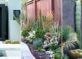 φύτεψε κάκτους στον κήπο σου