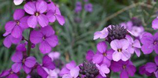 λουλούδια μικρό κήπο exypnes-idees.gr