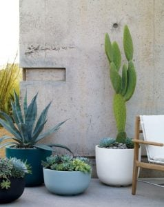 κάκτοι μέσα σε γλάστρες στον κήπο ή το μπαλκόνι