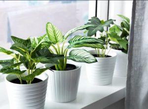 ψεύτικα φυτά