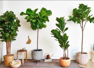 ψεύτικα φυτά που μοιάζουν αληθινά