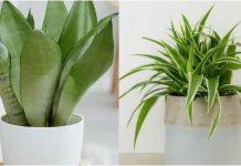 φυτά κατάλληλα για τον χώρο του μπάνιου