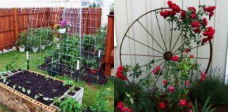 Αναρριχώμενα φυτά για κήπο