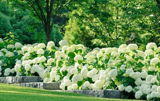 λουλούδια αλλεργίες συμβουλές
