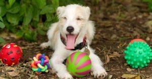 σκύλος παιχνίδια φύση