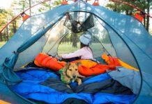 σκύλος σκηνή δάσος