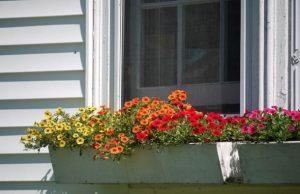 κήπος λουλούδια γλάστρες