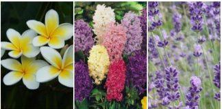 ευωδιαστά φυτά