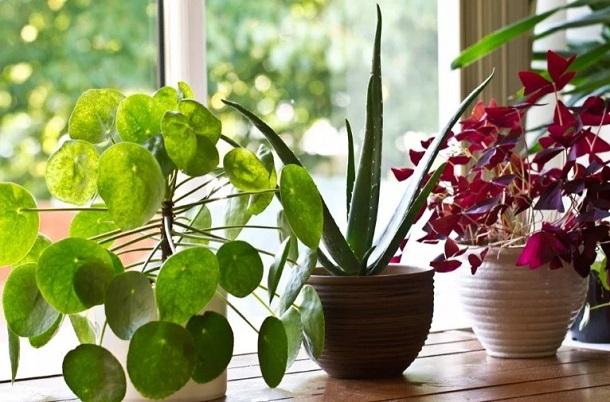φυτά εσωτερικού χώρου δροσερό σπίτι