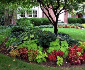 καλοπιστικά φυτά στον κήπο