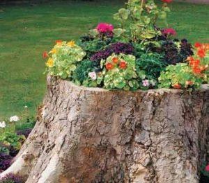 κορμός δέντρου διακοσμημένος σαν γλάστρα