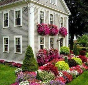 πολύχρωμα λουλούδια στον κήπο