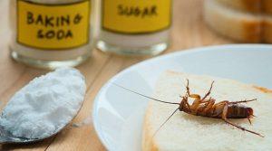 ψόφιες κατσαρίδες συμβουλές για σπίτι