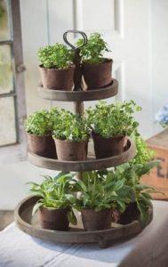 πιατελα με αρωματικα φυτα