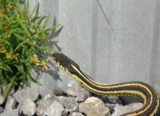 πως θα κρατήσεις τα φίδια μακριά από την αυλή σου
