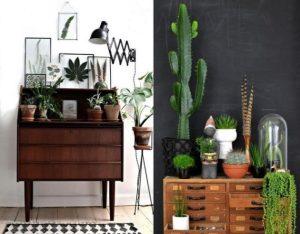 φυτά εσωτερικού χώρου που ανανεώνουν τον χώρο του σπιτιού