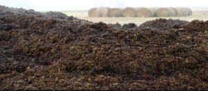 κοπριά ζώων ως λίπασμα για την ανάπτυξη των φυτών