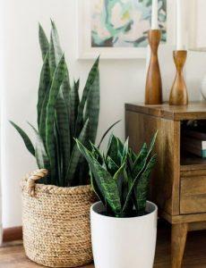 φυτά εσωτερικού χώρου