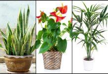 υπέροχα φυτά εσωτερικού χώρου