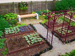 λαχανικά φθινόπωρο κήπος