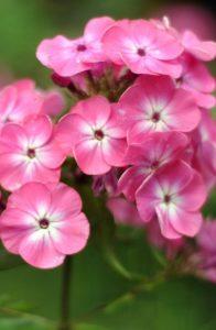 λουλούδια αυλή χειμώνας