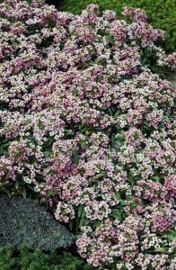 χειμερινός κήπος λουλούδια
