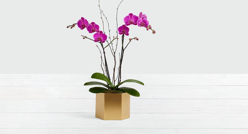 μοβ ορχιδέα χρυσή γλάστρα φυτά τύχη